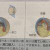 夏休み特別編〜いぼ痔が痛いか痛くないかの分かれ道は発生過程における外胚葉由来か内胚葉由来かである理由
