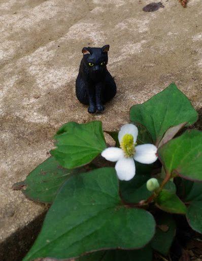黒猫 どくだみ