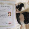 猫の長寿表彰状。日本動物愛護協会から18歳以上の猫さんに♪