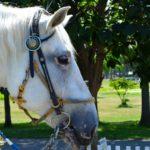 ウマ〜白馬に乗った王子様は現れるだろうか