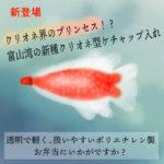 ぐっちーさんと話そう<12>富山のクリオネ、お姫様弁当でビジネスチャンス!?