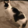 猫の慢性腎臓病:早期発見には定期健診