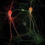 心・脳・機械(17)情動と神経系(SSRI)