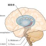 心・脳・機械(21)癖と学習とドーパミン