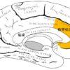 心・脳・機械(16)情動と神経系(哺乳類・前帯状皮質)