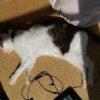 高齢猫の食欲増進のためにできること。フード選びと与え方の工夫。