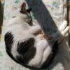 皮下輸液(皮下点滴)は効くのか? 腎臓病の猫の脱水対策