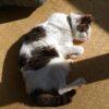 猫の腎臓病の血液検査。尿素窒素が120、クレアチニンが6.9に。