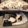 愛猫の葬儀場を探す【21歳の猫ムギのブログ】
