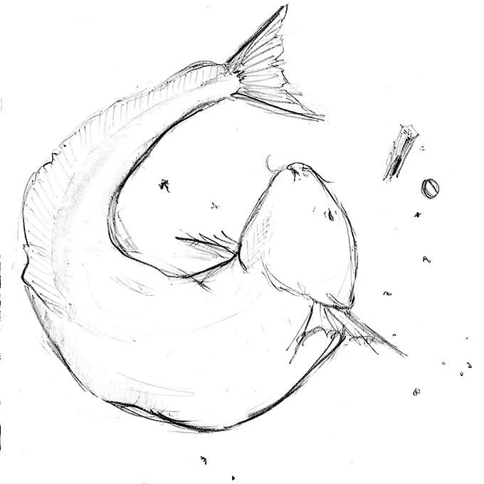「この魚は誰のもの?」なるかわしんご
