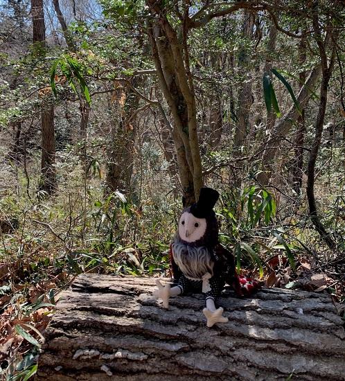 フクロウ紳士 森の中