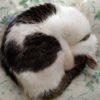 猫の慢性腎不全には食事療法。食べてくれる療法食を探す。