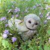 伝説の「春をまとうフクロウ」さんがいらっしゃいました!