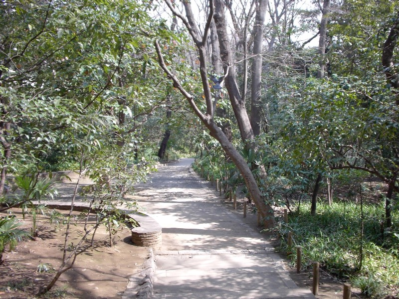 おとめ山公園 散歩道