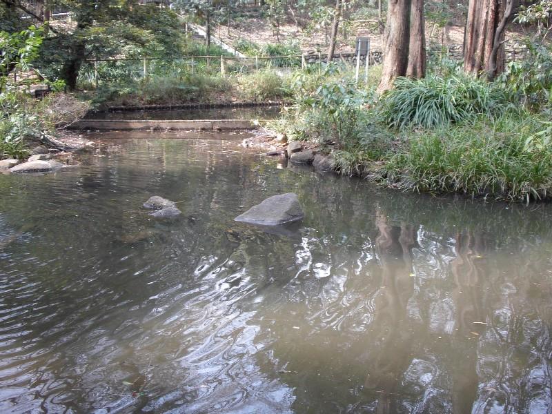 おとめ山公園の池 2007年3月撮影
