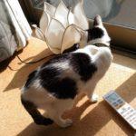高齢猫、体重減少との戦い。~20歳の猫ムギのブログ~