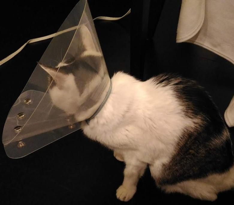 絞り 猫 こう もん せん 犬の肛門腺絞り(こうもんせん絞り)のやり方をトリマーが動画で解説!目的や頻度、自宅でできる方法も