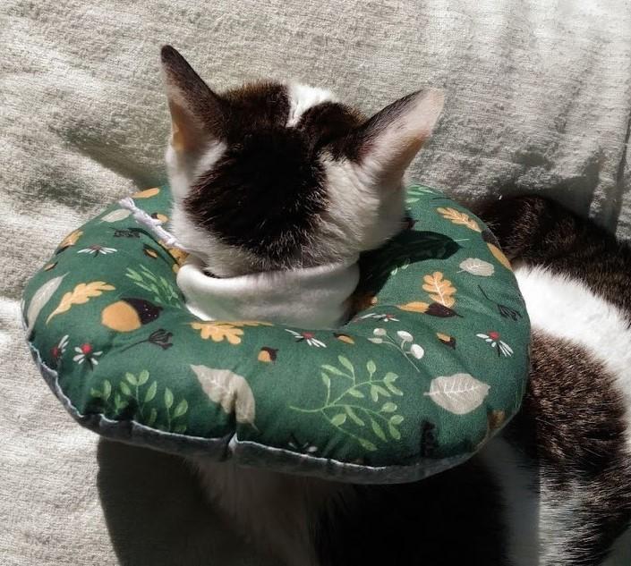 20歳の猫ムギのエリザベスカラー