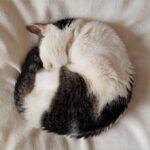 猫が21歳になりました【慢性腎臓病発覚から1365日】