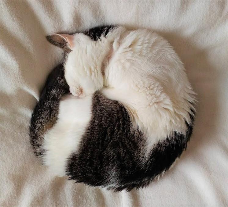 21歳の猫ムギ。首輪を取ってのニャンモナイト。