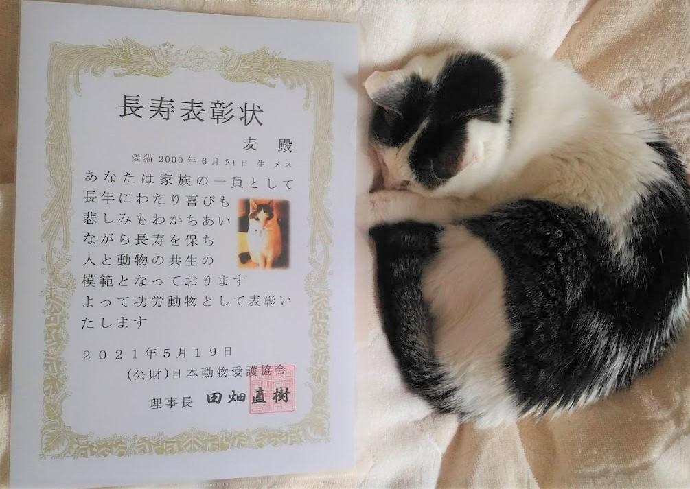 猫の長寿表彰状 動物愛護協会 もうすぐ21歳