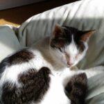 慢性腎臓病の療法食にはウェットタイプもある&猫が食べやすい食器