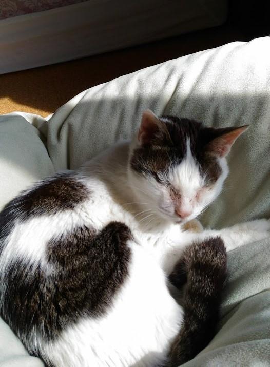 21歳の猫ムギのブログ
