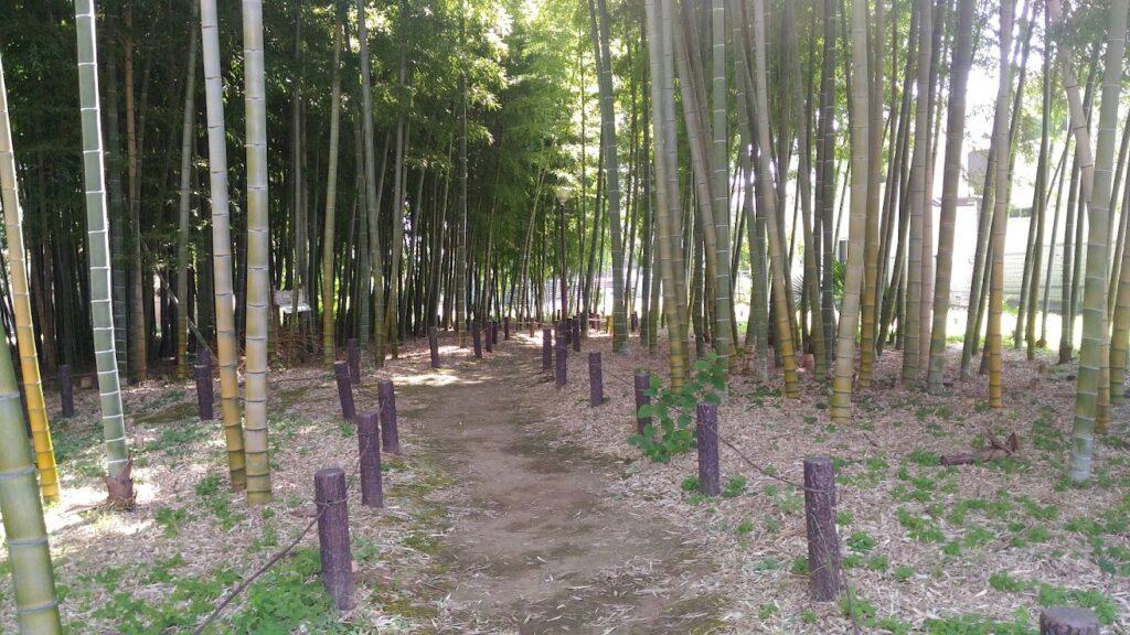 観蔵院近くの竹林