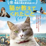 正月映画のお勧め2本。トルコ映画「猫が教えてくれたこと」とインド映画「バーフバリ 王の凱旋」