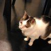 猫が二十歳になった。うれしくて泣きそう。にゃ~~~!!